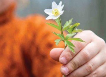 לתת – ספירת העומר ושבועות